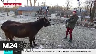 """""""Утро"""": теплая погода ожидается в столичном регионе 21 февраля - Москва 24"""