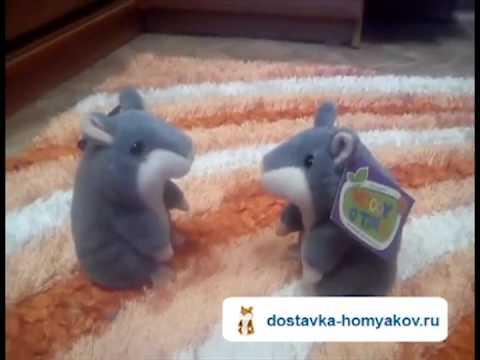 Говорящие хомяки ругаются между собой! Купить говорящего хомяка: dostavka-homyakov.ru