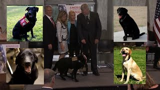 Dogs Honored for Their Military Service in Capitol Hill Ceremony