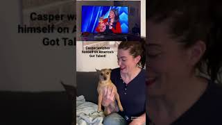Casper the singing dog reacts to himself on AMERICA'S GOT TALENT