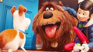 Знакомься, это Дюк, твой новый братик! / Тайная жизнь домашних животных (2016)