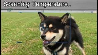 shibe-scans-local-temperature