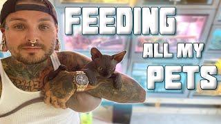 Feeding ALL 55 of my Animals! | Tyler Nolan