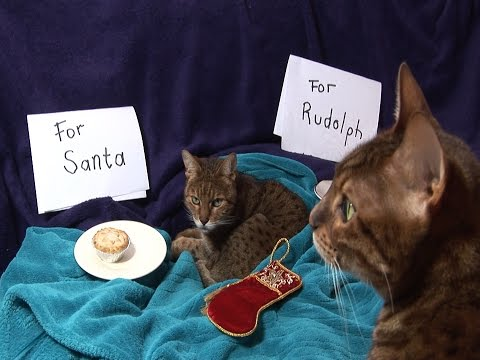 Kitty Christmas Song