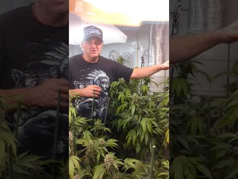 Bokashi PRO-GRO ™ living organic fertilizer bloom day 33