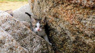 防波堤で無邪気に遊ぶ子猫たちがカワイイ