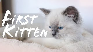 HOW TO PREPARE your home for a KITTEN   Ragdolls Pixie and Bluebell