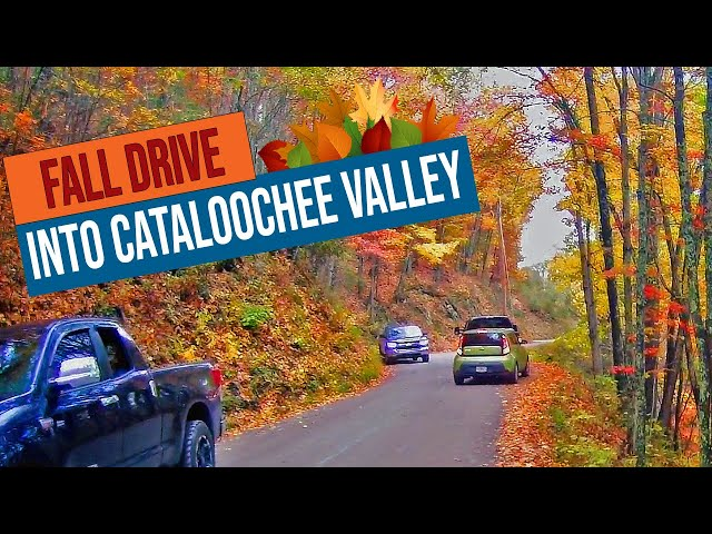 Busy Fall Drive into Cataloochee Valley