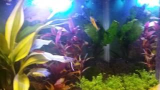 Szklarnia w akwarium
