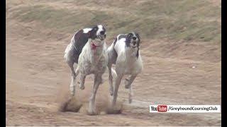 Track racing   Track race 10-11-12 February 2018 #4   dog race