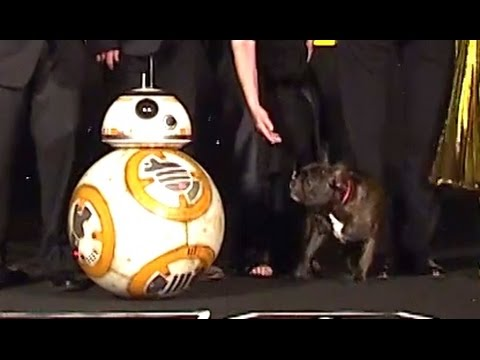 Carrie Fisher's Dog Barks at BB-8 at the Star Wars London Premiere (2015)
