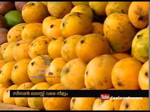 Mango Season in Kerala border districts | അതിര്ത്തി ജില്ലകളില് ഇത് മാമ്പഴക്കാലം