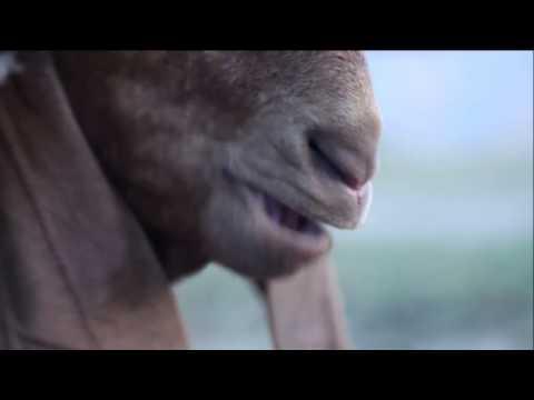 Eid mubarak funny video