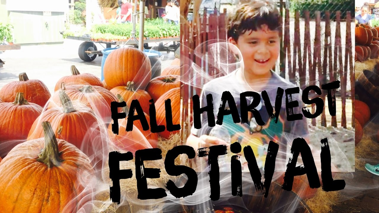 Ray Ride And Pumpkin Painting At Flamingo Road Nursery Fall Harvest Festival