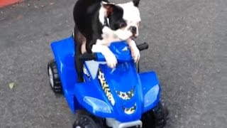 Dogs Animals and Power Wheels Compilation