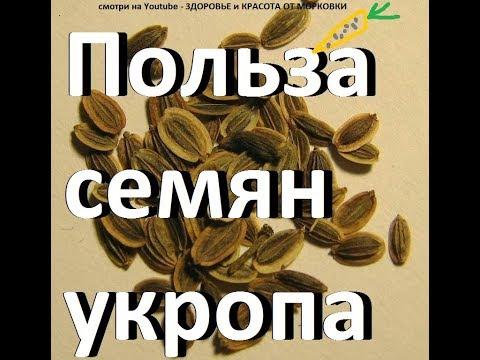Как заваривать укропные семена