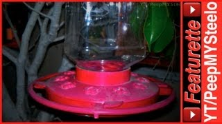 Best Hummingbird Feeders By First Nature For Retail & Diy Homemade Sugar Water Food Recipes
