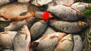 МОРДАТЫЕ КАБАНЫ НА ХИТРУЮ СМЕСЬ рыбалка на карася ловля карася на поплавок