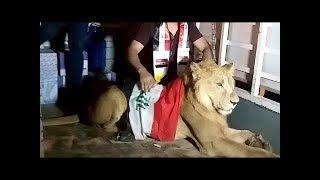 شاهد أسد من مظاهرات أليوم وتفاعل ألناس عجيب !!!