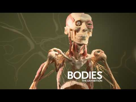 Bodies The Exhibition - Las Vegas