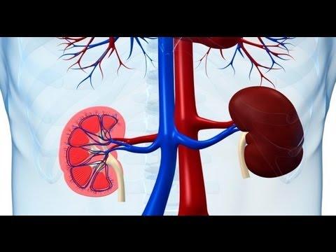 how-to-maintain-healthy-kidneys---dr-deepa-jayaram