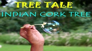 Tree Tale - Indian Cork Tree | English | arvindguptatoys