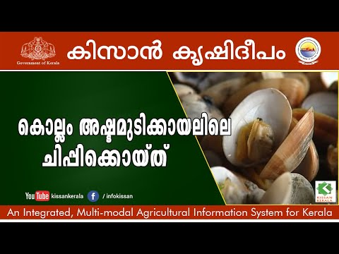 Documentary on Cultivation of Mussel at Ashtamudi kayal, Kollam - 616