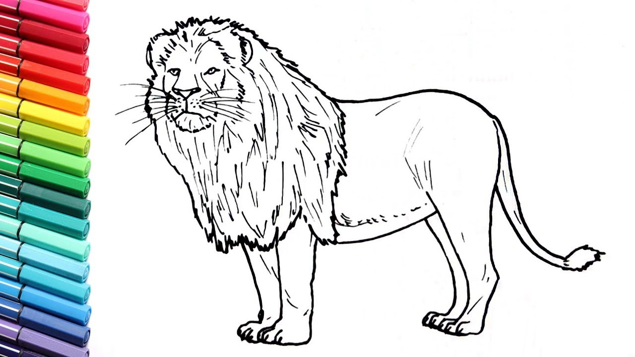 lion animal coloring pages. How to Draw a Lion  Learning Wild Animals Color pages for Kids Colors with