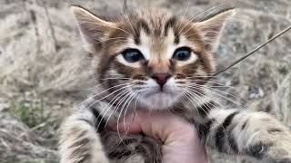 14 Impressive Animal Rescue 🙀