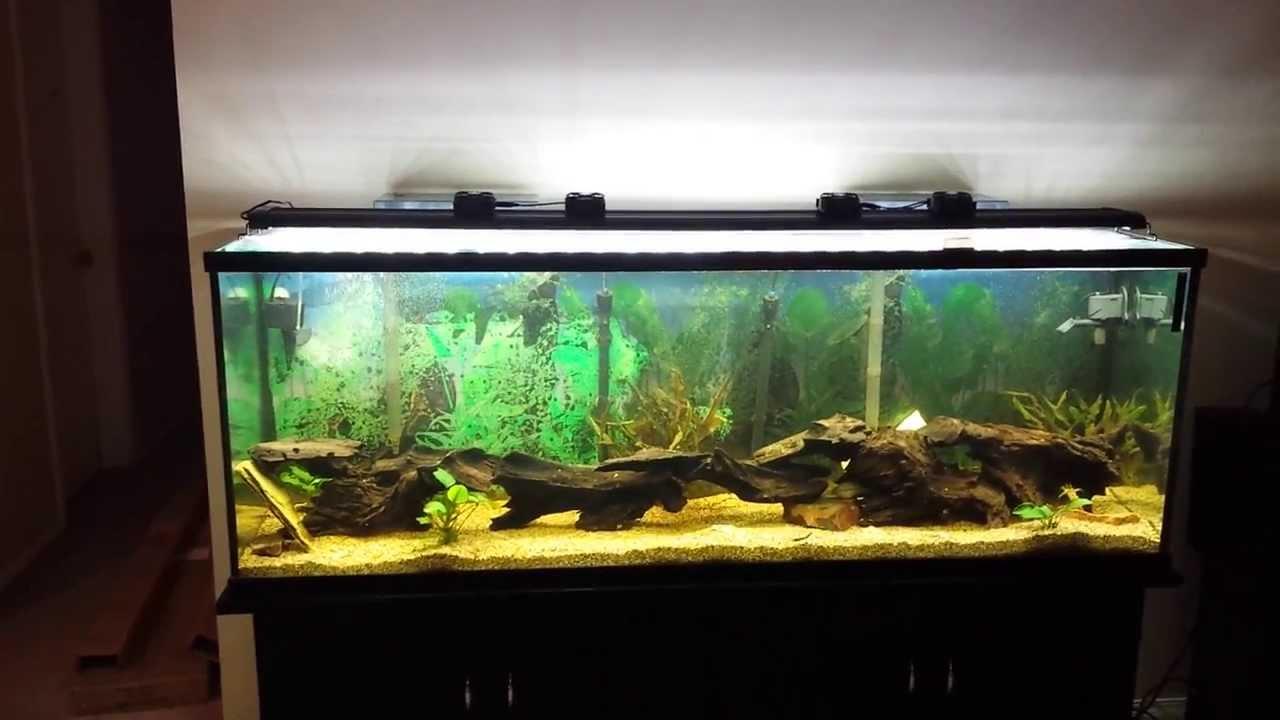 beamworks led light fixture 72 freshwater plants youtube