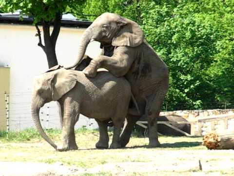 Słonie w zoo - YouTube