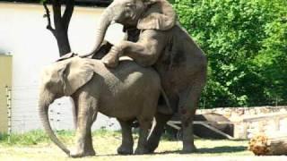 Słonie w zoo