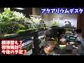 【アクアリウム】 アクアリウムデスク 模様替え!【部屋紹介】【アクアテラリウム】my aquarium desk