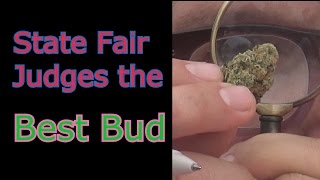 This State Fair Judges Pot & Other Wonderful Things