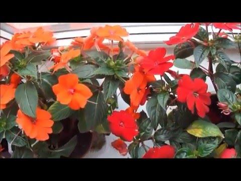 Комнатные цветы Секреты цветения