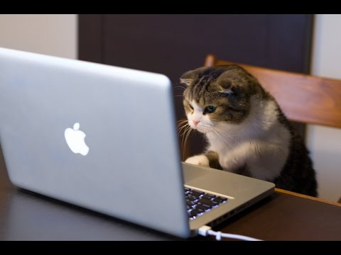 Adorable Cats Compilation – Funny Cat Vines #12 – Cat and the friends