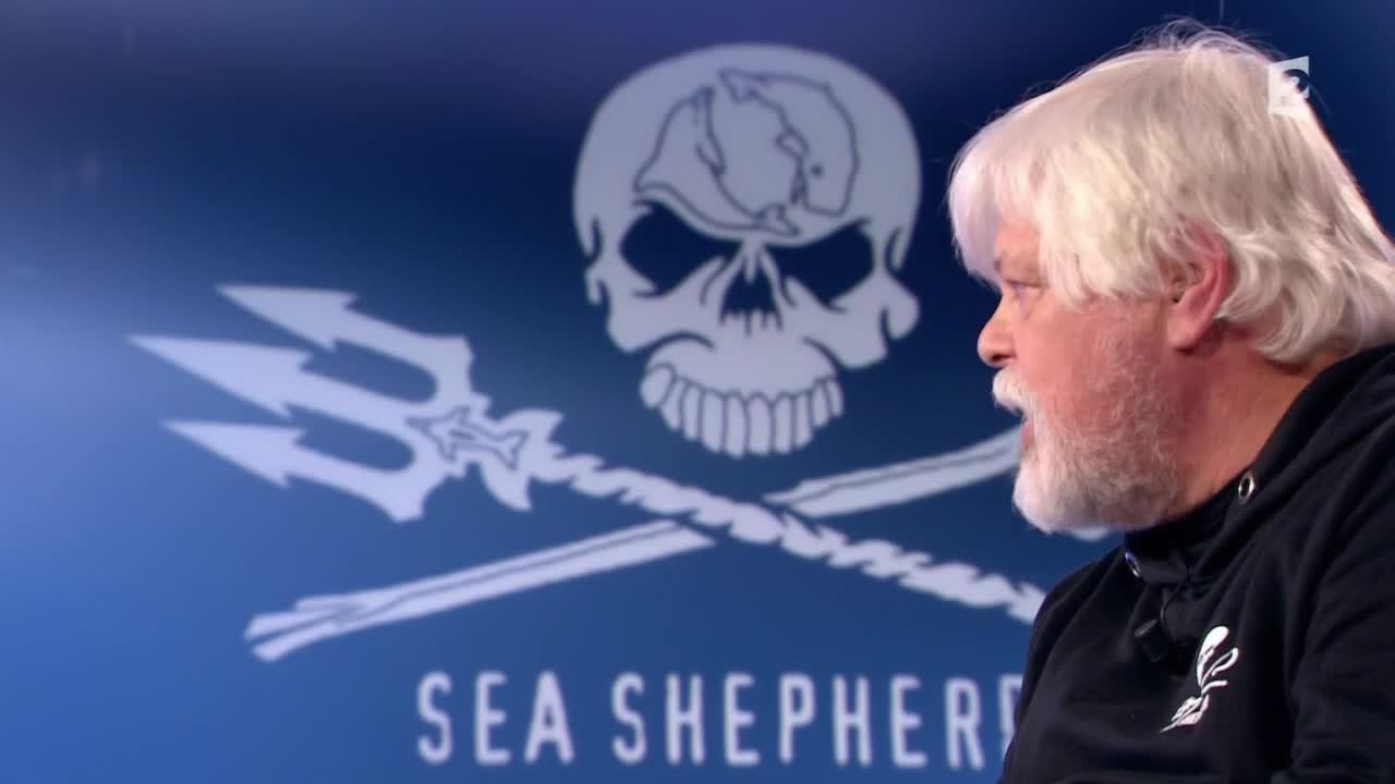 Paul Watson au sujet de Greenpeace: