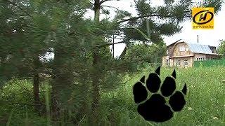 видео: Медведь держит в страхе жителей двух деревень