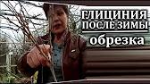 ГЛИЦИНИЯ BLUE MOON. Ченнелинги с О.М. - YouTube