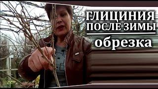 видео Видеоряд на тему разведения цветов и ухода за ними