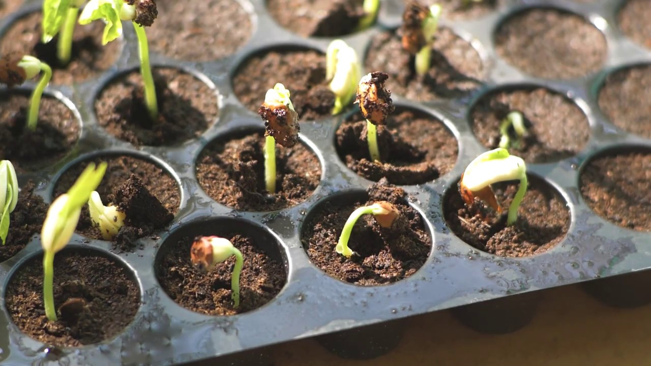 Download Seedling production