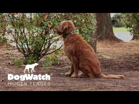 """My Dog Stops at Nothing"" - DogWatch Hidden Fences"