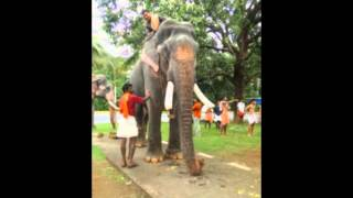 Top 15 ELEPHANTS in Kerala.