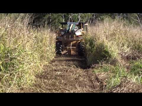 Mulching 8 Foot Guinea Grass