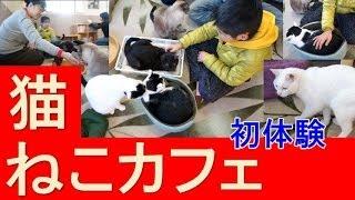 猫カフェに行った★猫大好き★ねこcafe にゃんこっこ cat Cafe