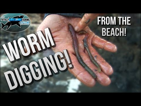 How To Dig Worms To Catch Fish | TAFishing