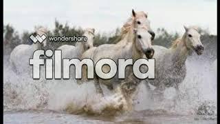 Фото красивых лошадей