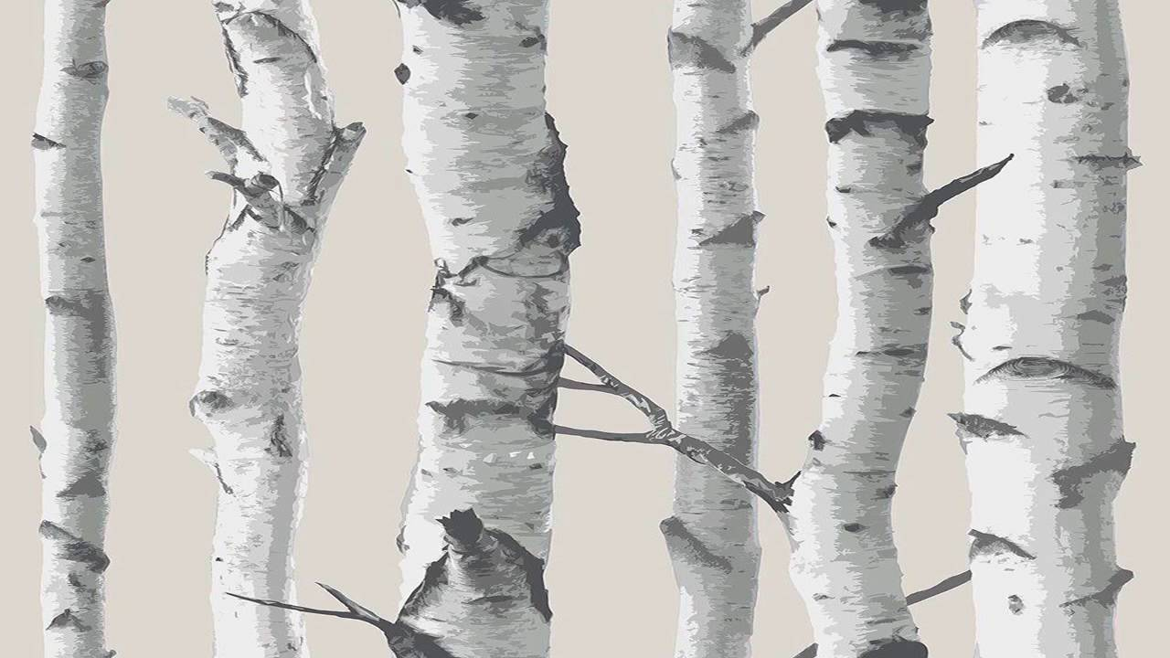 Birch Tree Peel And Stick Wallpaper - YouTube