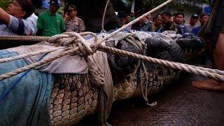 Crocodile mauls woman to death in Indonesia