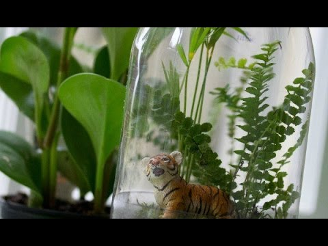Rainforest In A Bottle Youtube